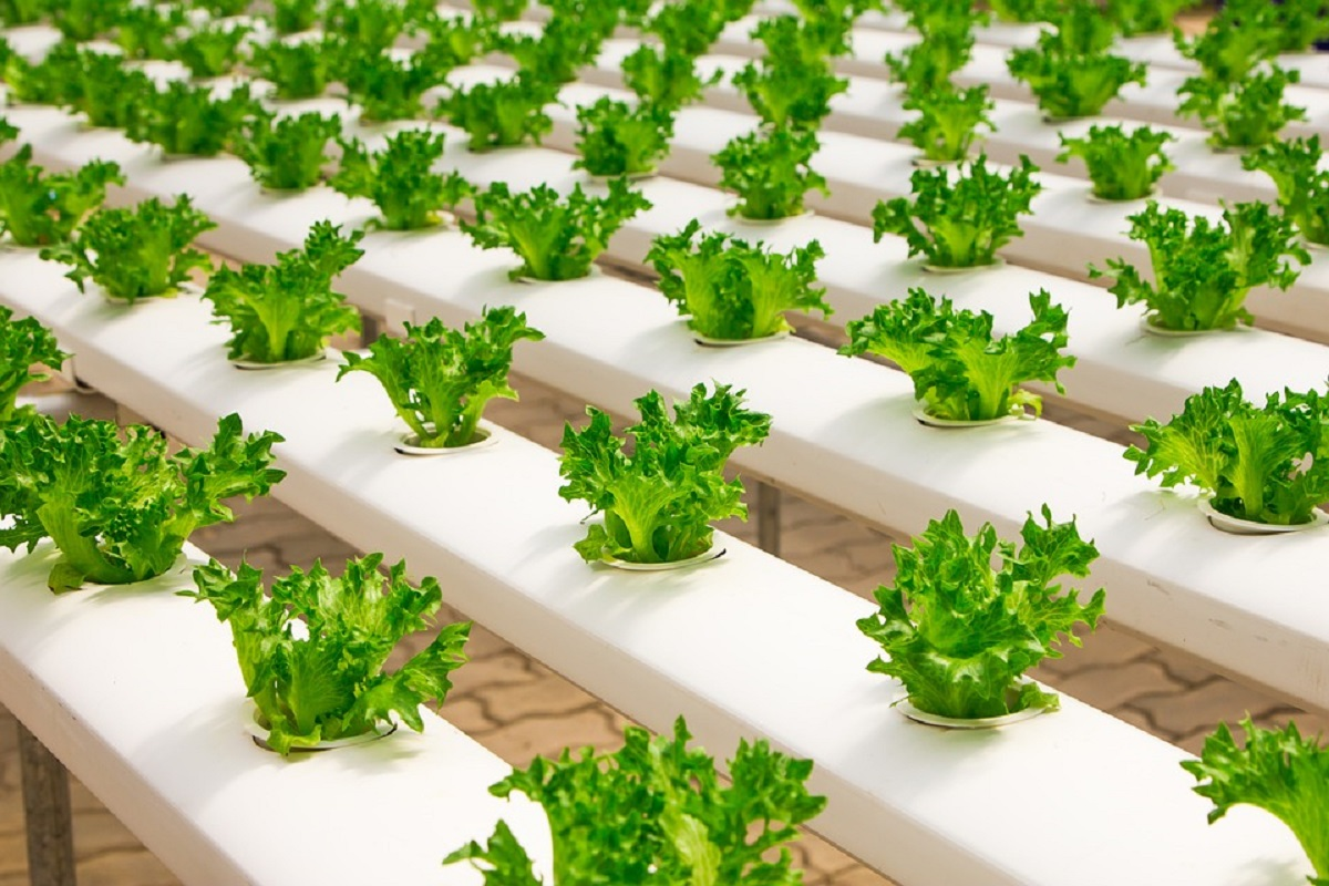 25% subsidy for landless agriculture - Aeroponics technology to turn investment into profit!