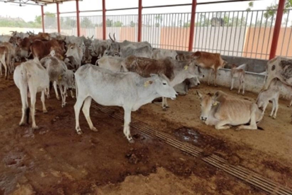 Central government is building 25 thousand cattle sheds for Tamil Nadu!