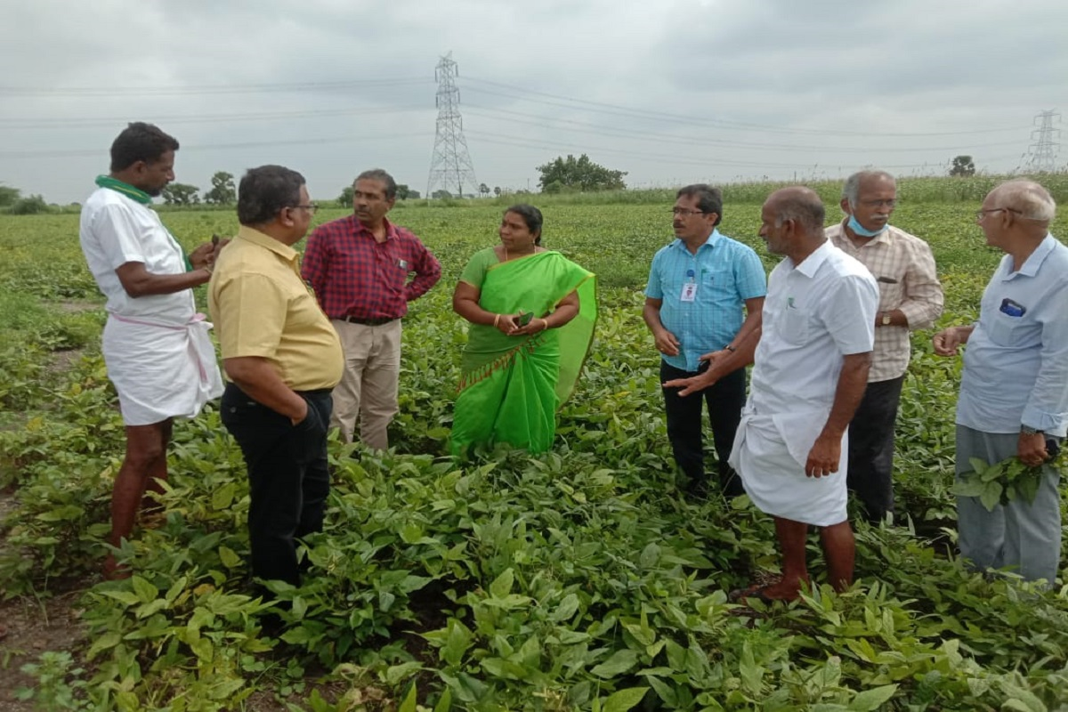 How to make quality seed production in pulses?