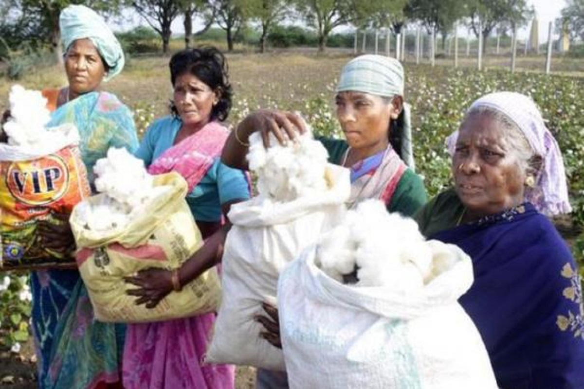 Cotton Purchase