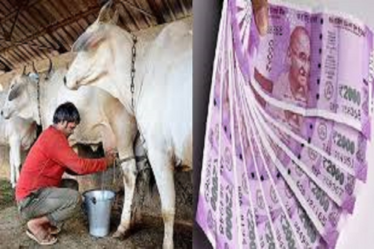 Kisan credit card for dairy farmers to be issued to 41 lakh people soon!