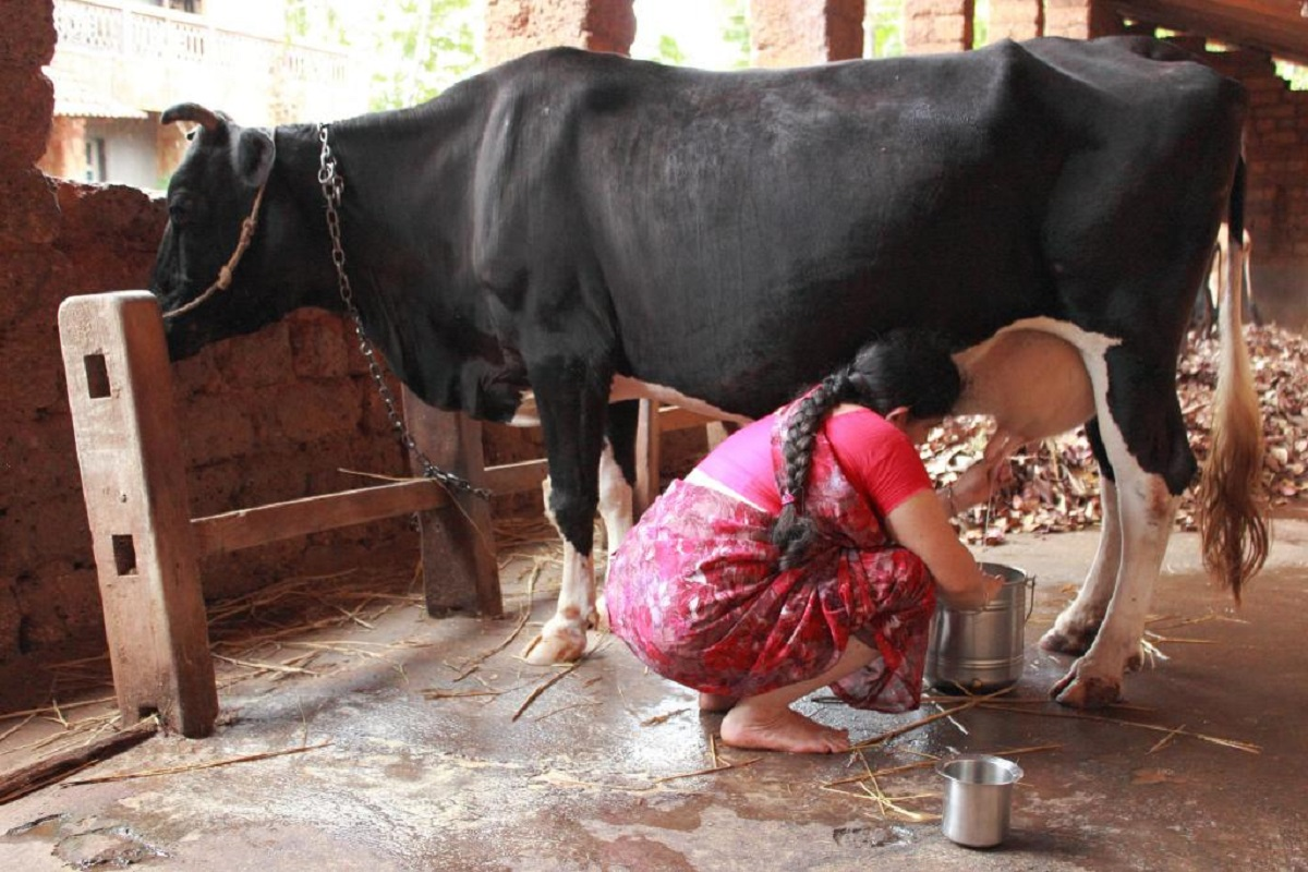 What can be feed with a lot of nutrients in cow's milk?