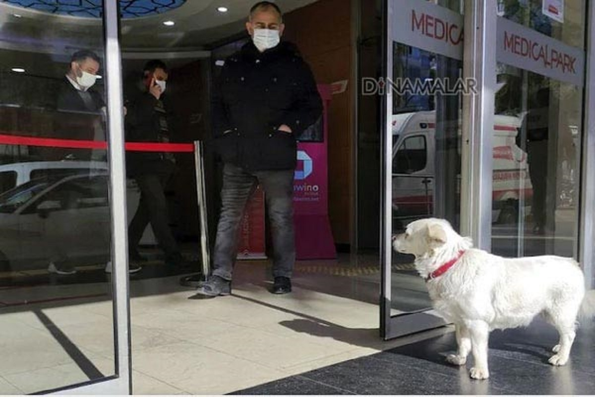 Sick master- dog waiting at the hospital gate for arrival!