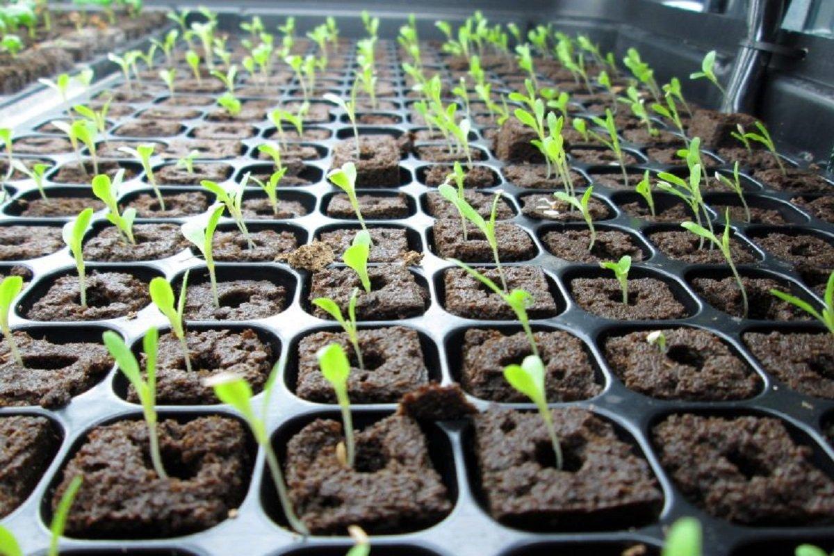 Sales target of 5 lakh vegetable seedlings - Horticulture organized!
