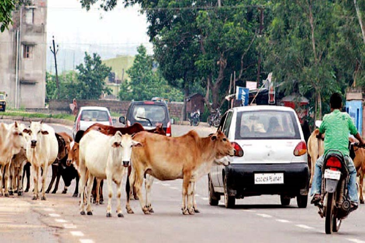 Livestock farmers fined up to Rs 10,000 - People Ushar!