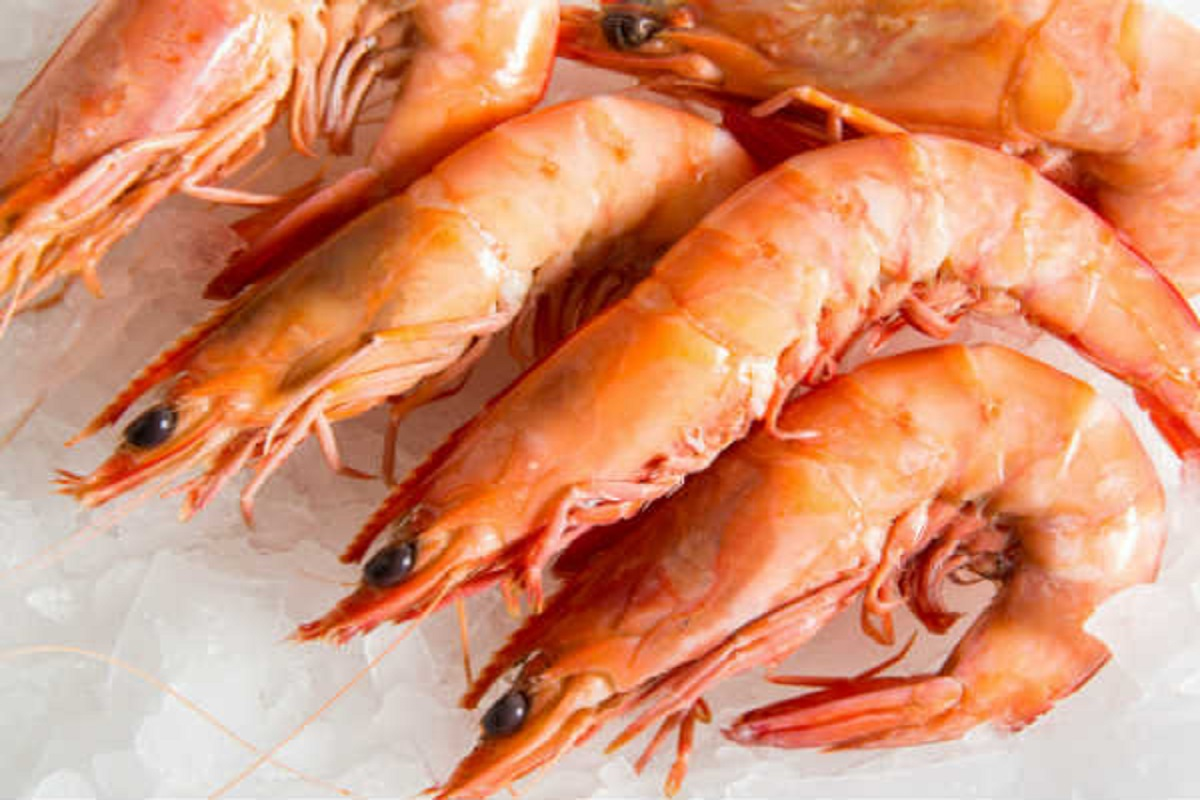 Shrimp prices fall sharply due to non-export
