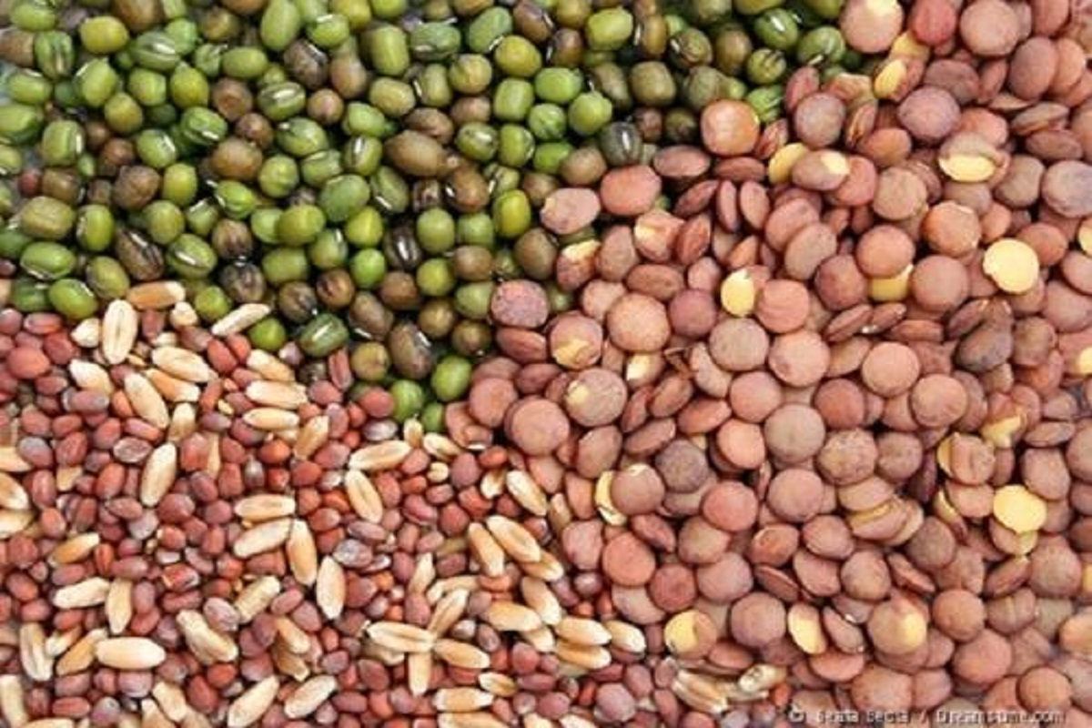 Severe shortage of seeds - farmers forced to buy at higher prices!