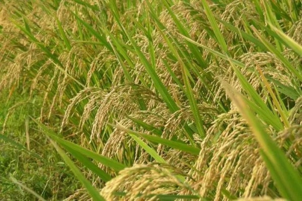 Farmers in paddy-turmoil at the procurement center!