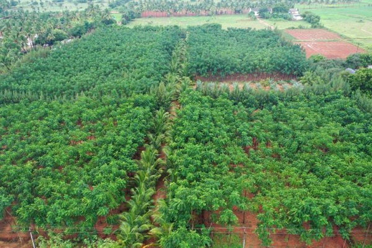 Forest in Tirupur