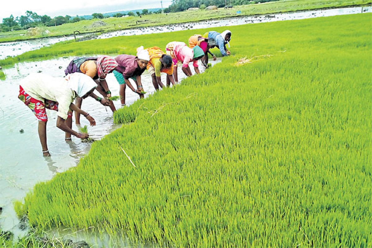 Paddy purchase suspension - Farmers in pain!