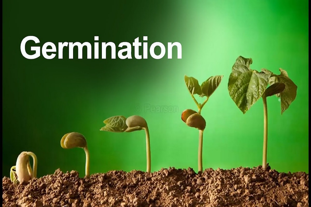 Seed germination test is essential to increase the yield!