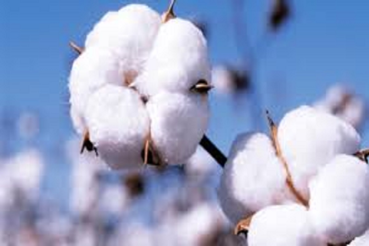 Cotton will fetch a good price this time- TNAU Prediction!