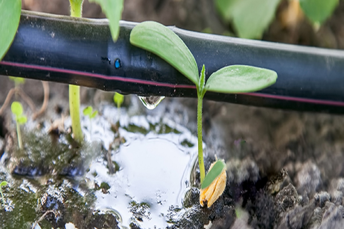 What are the requirements to be followed during drip irrigation?