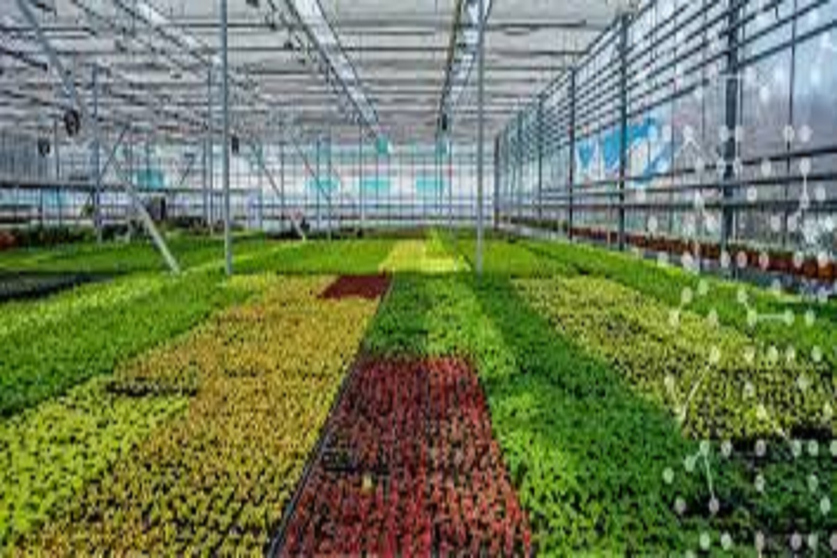 Cultivation of many crops that will alleviate the micronutrient deficiency of the land!