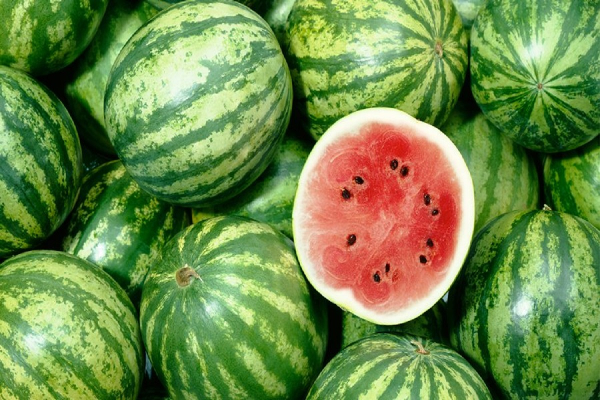 To get high yield in watermelon- Simple steps!