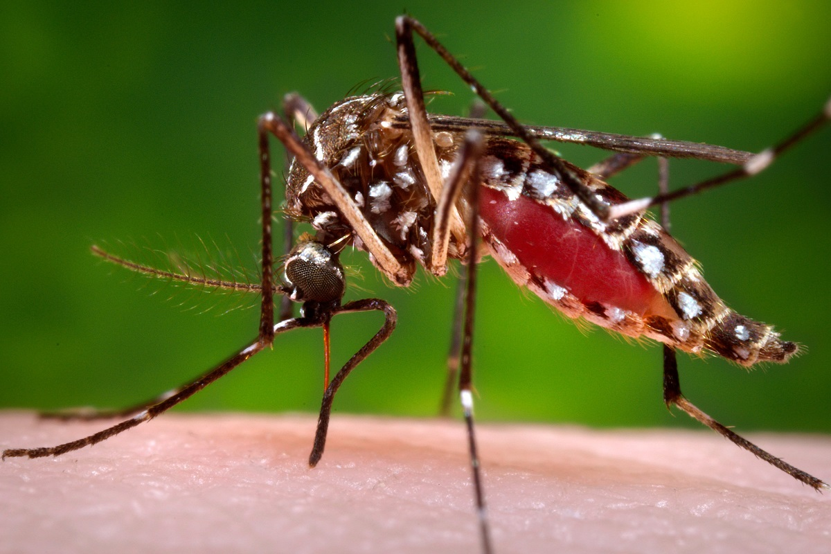 If you have these sprays in your home, you can easily ban mosquitoes!