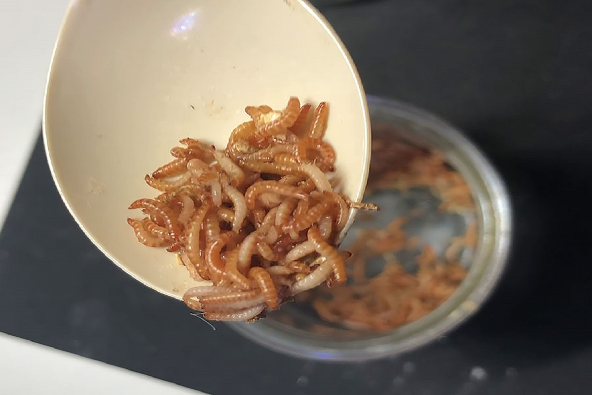 Protein worms in peanuts - best ways to control!