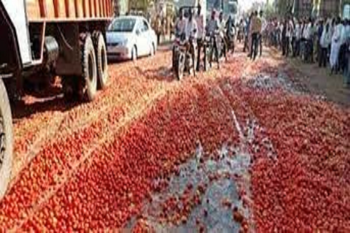 Tomato hills appearing on the road - the result of increased yields!