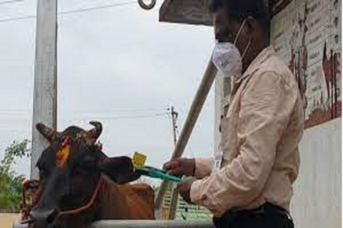 Vaccination of cattle after the Assembly elections!