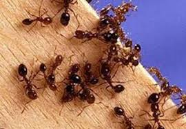 Simple tips to control ants in the garden!