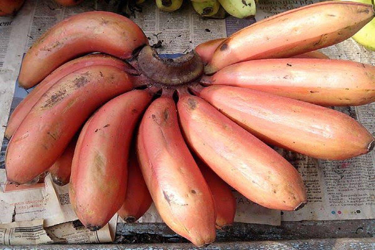 Benefits of Red Banana
