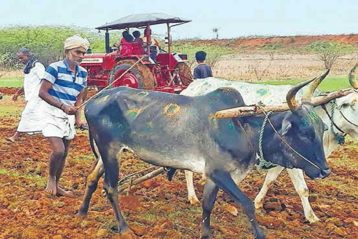 Traditional Cultivation