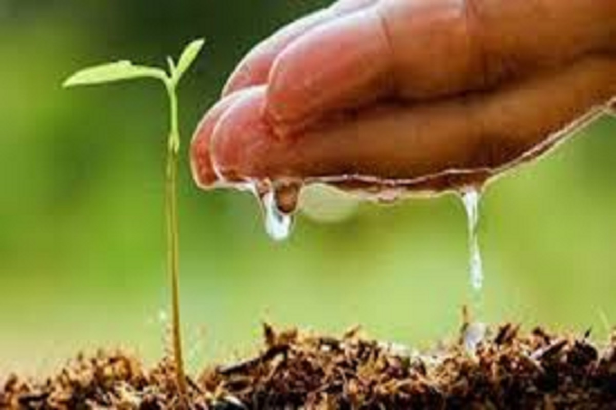 Liquid microbial farming to revitalize the crop during drought!