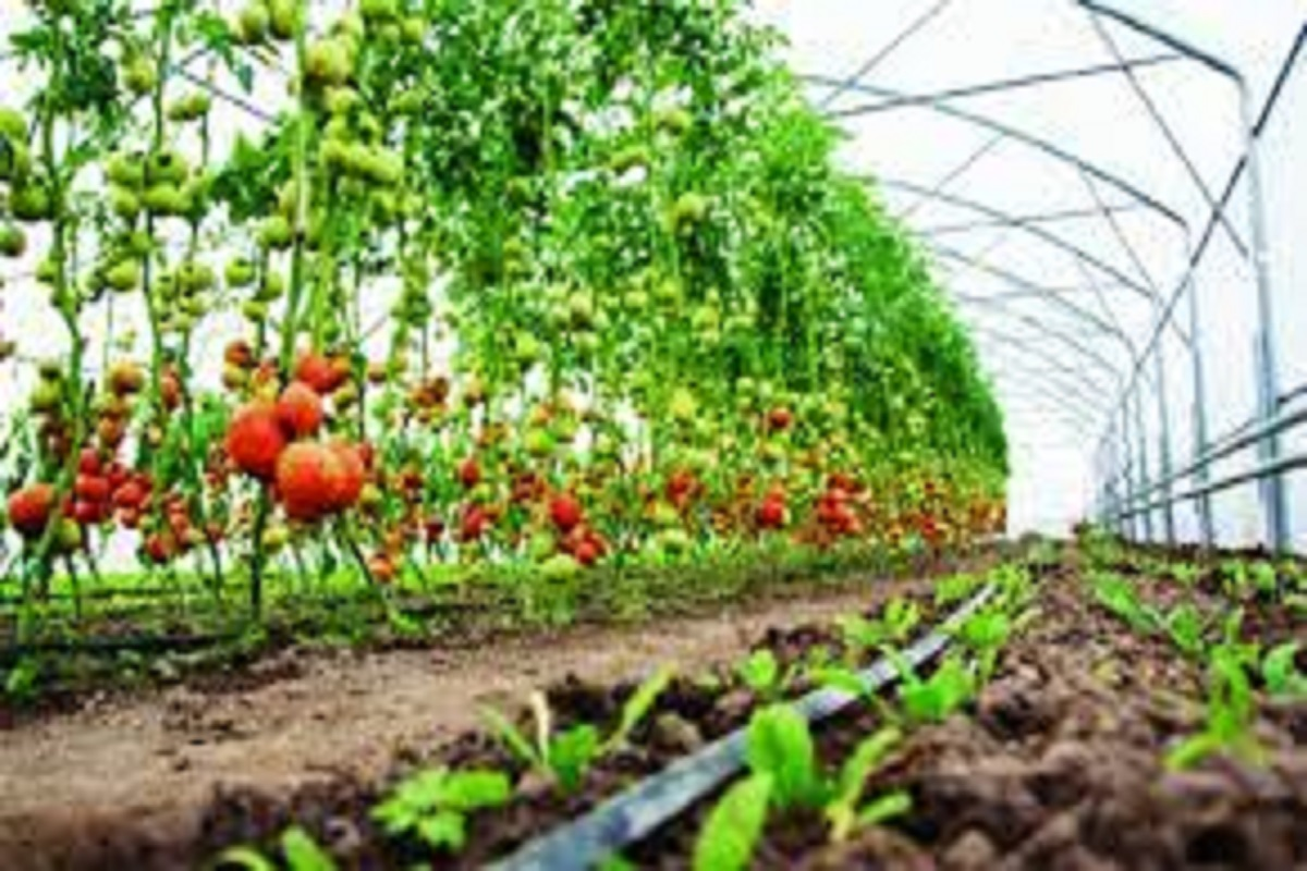 To Grow horticultural crops and earn double income!