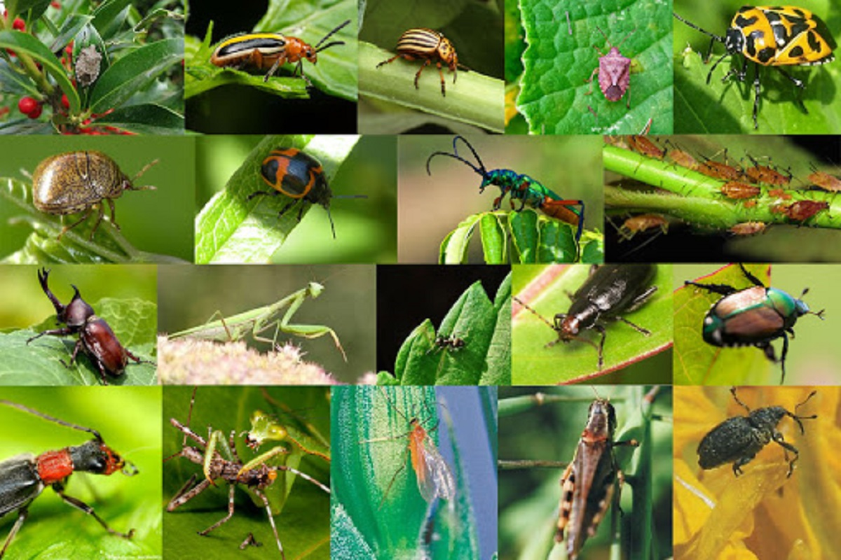Understand Insects - Training through Video!