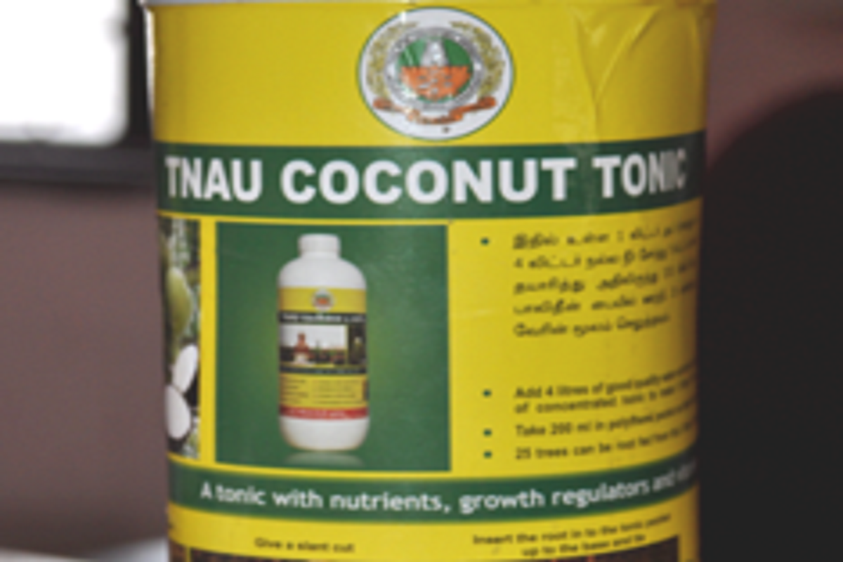 Coconut tonic for sale at the Agricultural Science Center!