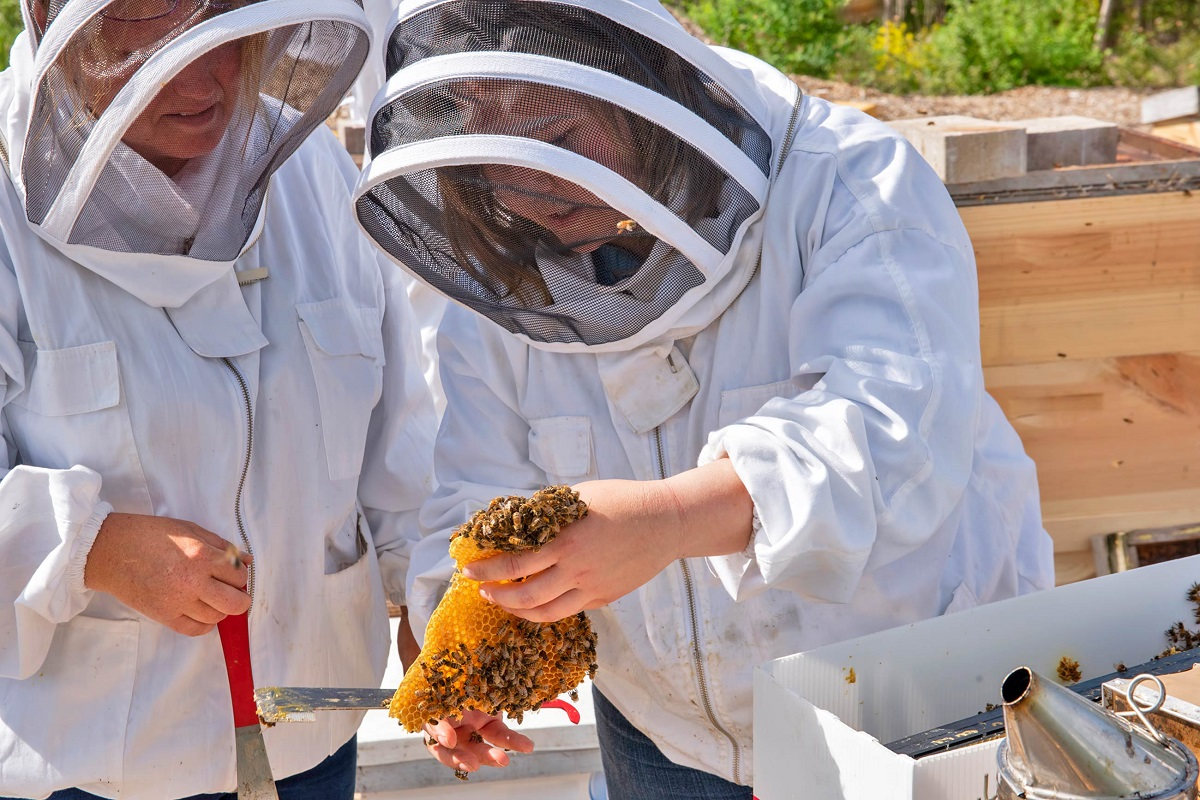 Opportunity to learn beekeeping properly - 3 day training online!