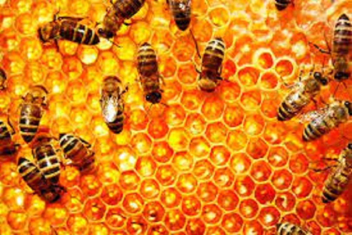 Seminar on Scientific Beekeeping and Online Training!