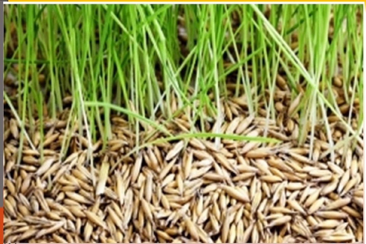 If certified quality seed paddy is not sold, severe action!