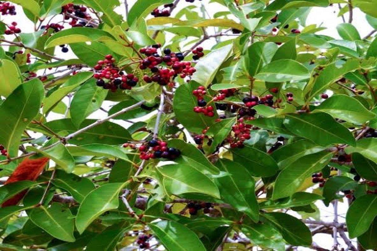 Novel Fruit