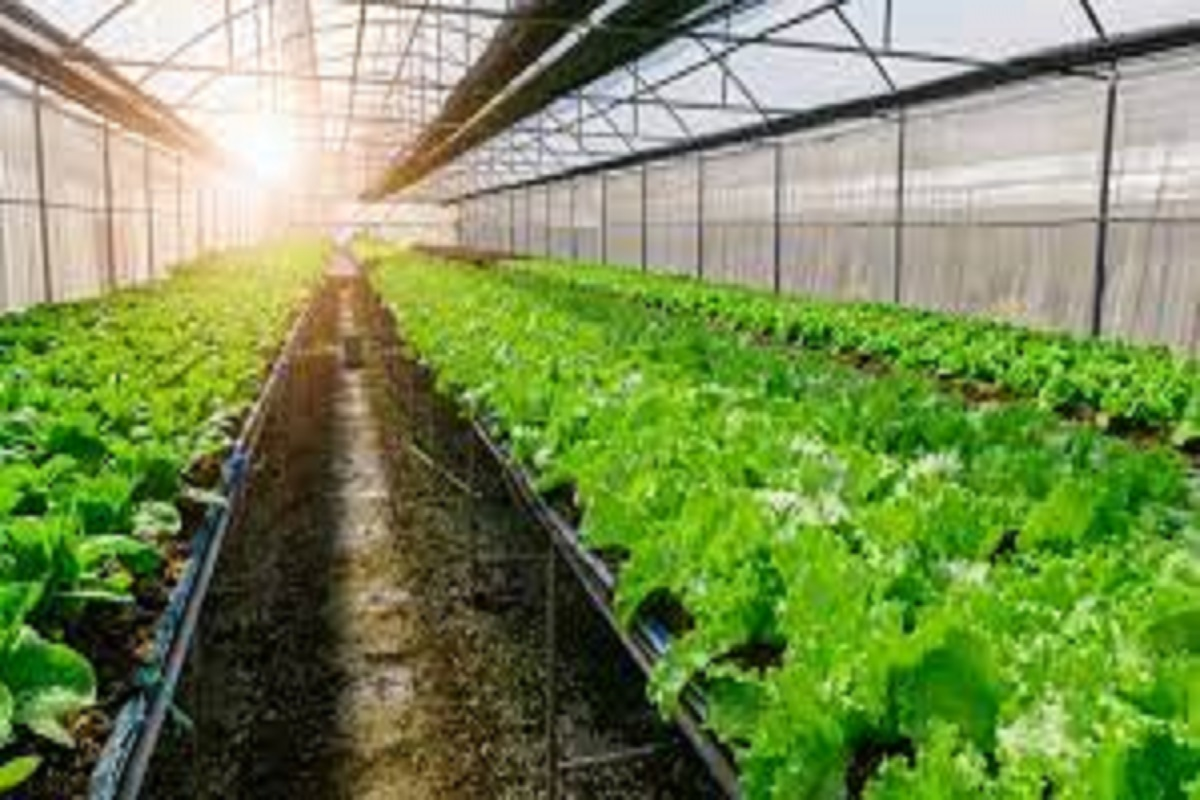 New projects to promote organic farming!