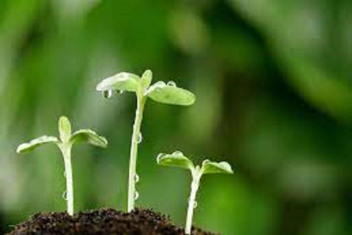 Liquid bio-fertilizers to reduce the cost of cultivation - Agricultural instruction!