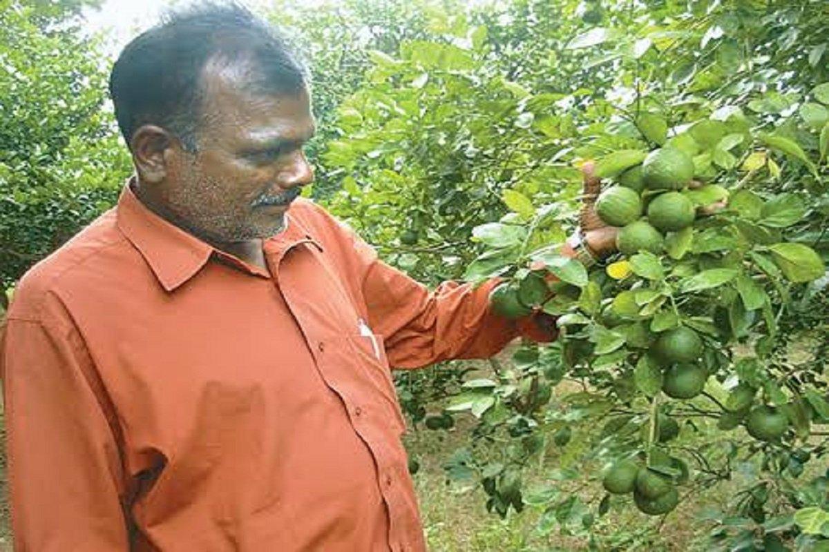 Sathukudi Cultivation