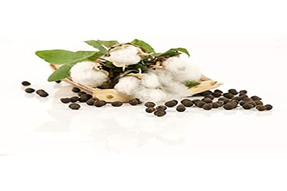 Ban on sale of genetically modified cotton seeds!