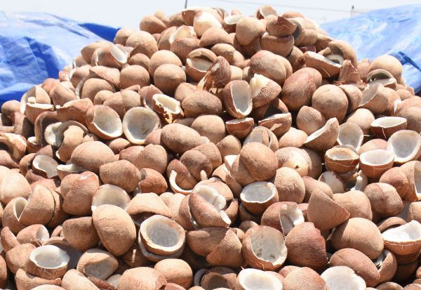 Target to purchase 1,100 tons of copra!