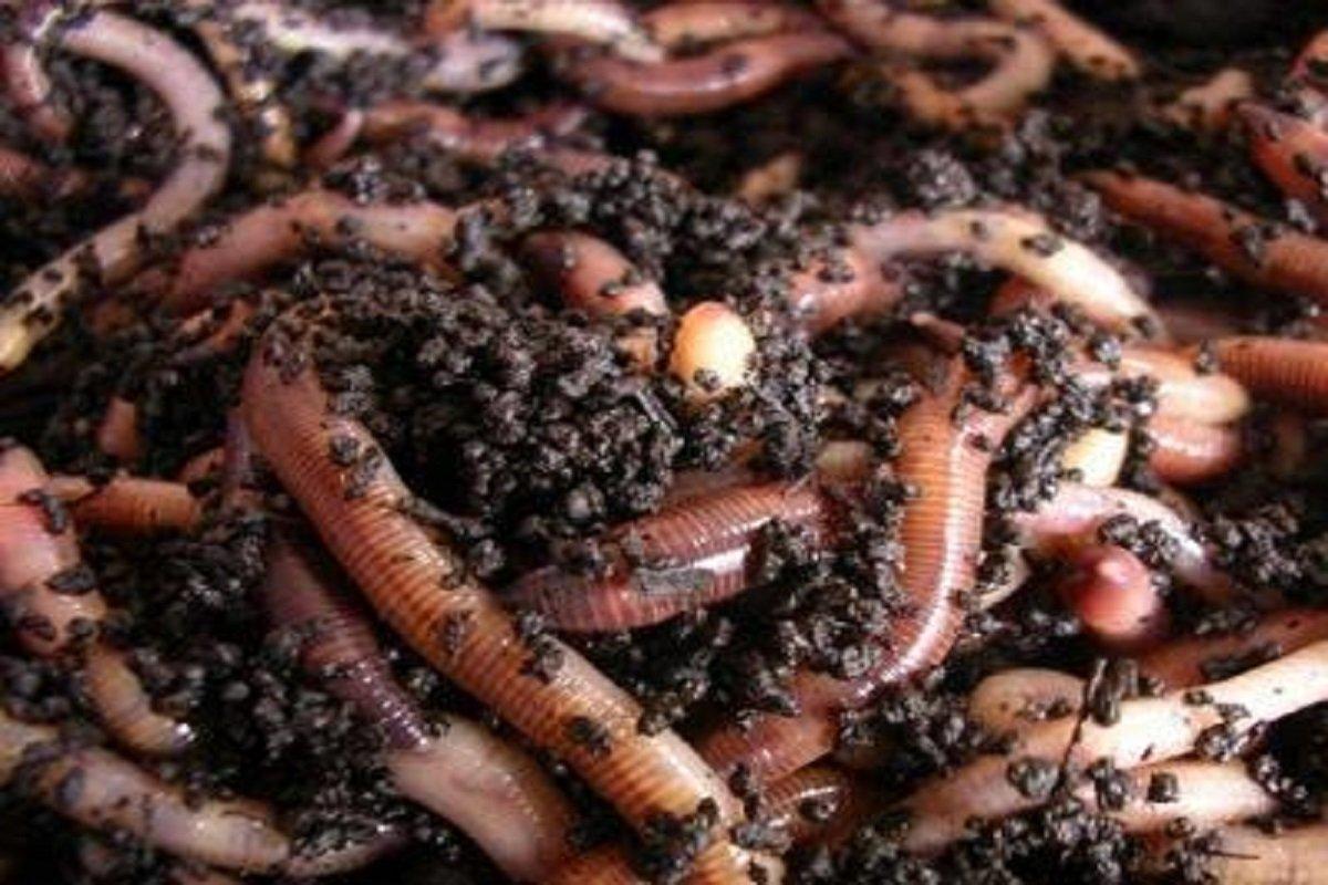 Natural Compost
