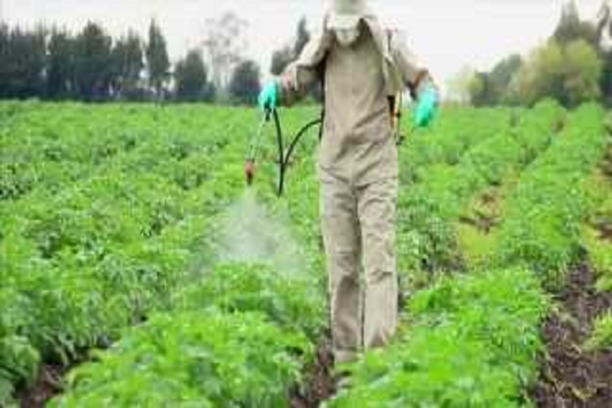 Things to keep in mind when spraying pesticides!