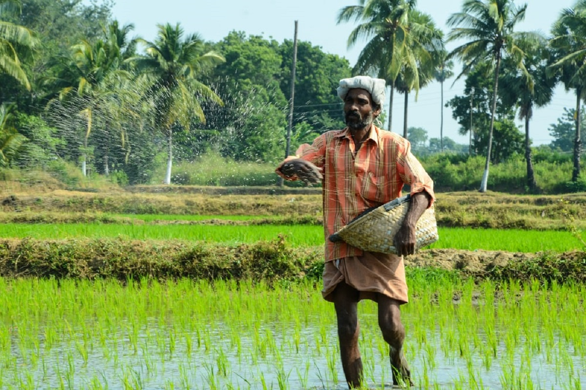 Seed treatment in paddy cultivation - Advice from farmers
