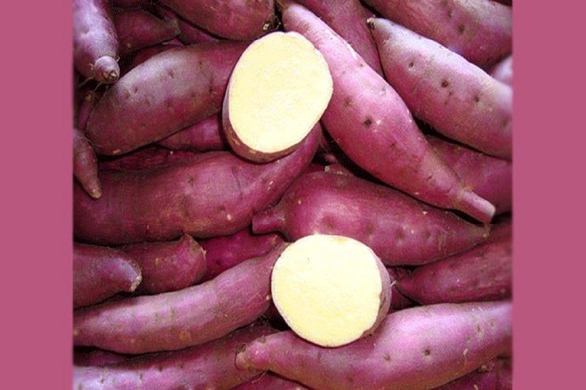 Can diabetics eat sweet potato?