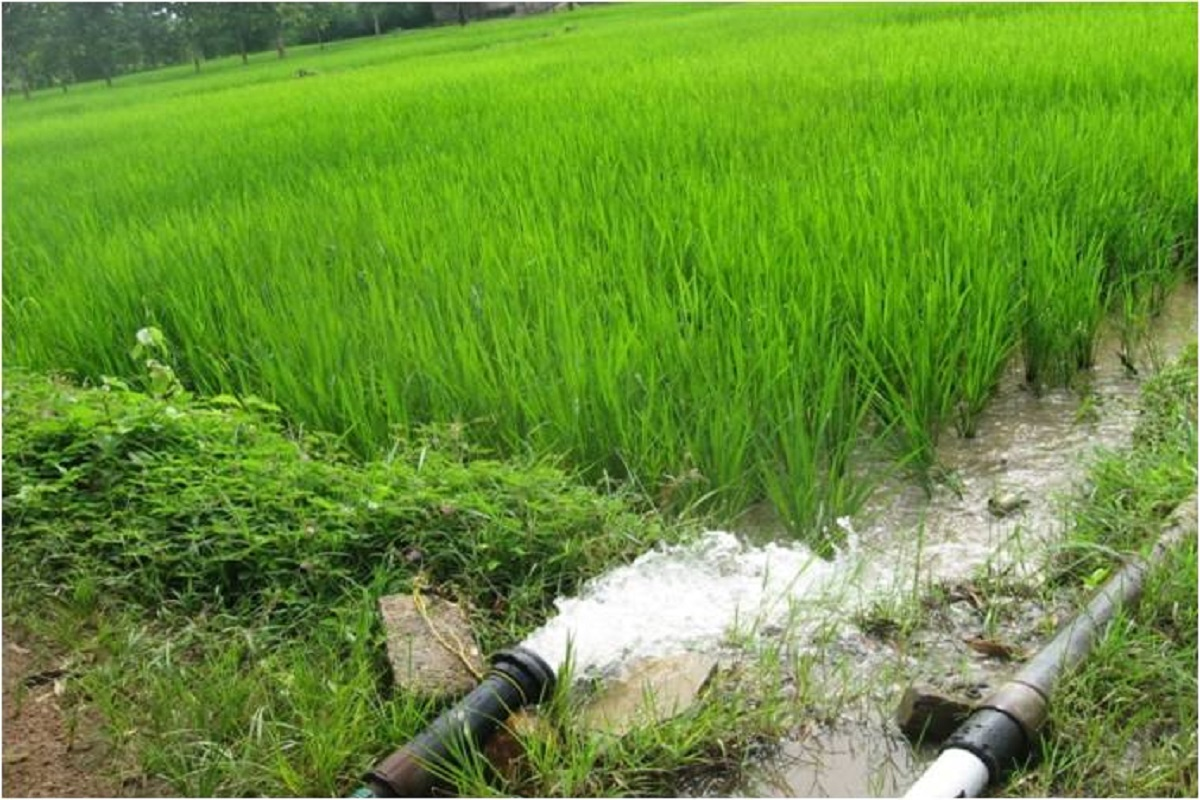 Paddy and Onion Crops-Call for Insurance!