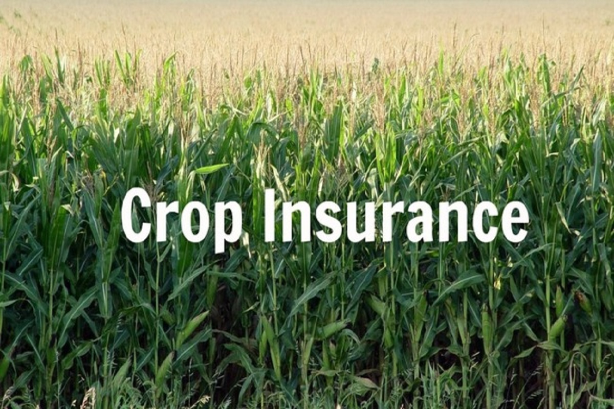 Call for paddy, maize, cotton-crop insurance!