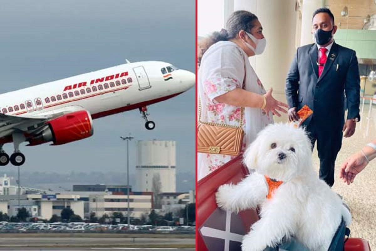 The woman who flew the plane with pets - the strangest who spent Rs 2 lakh!