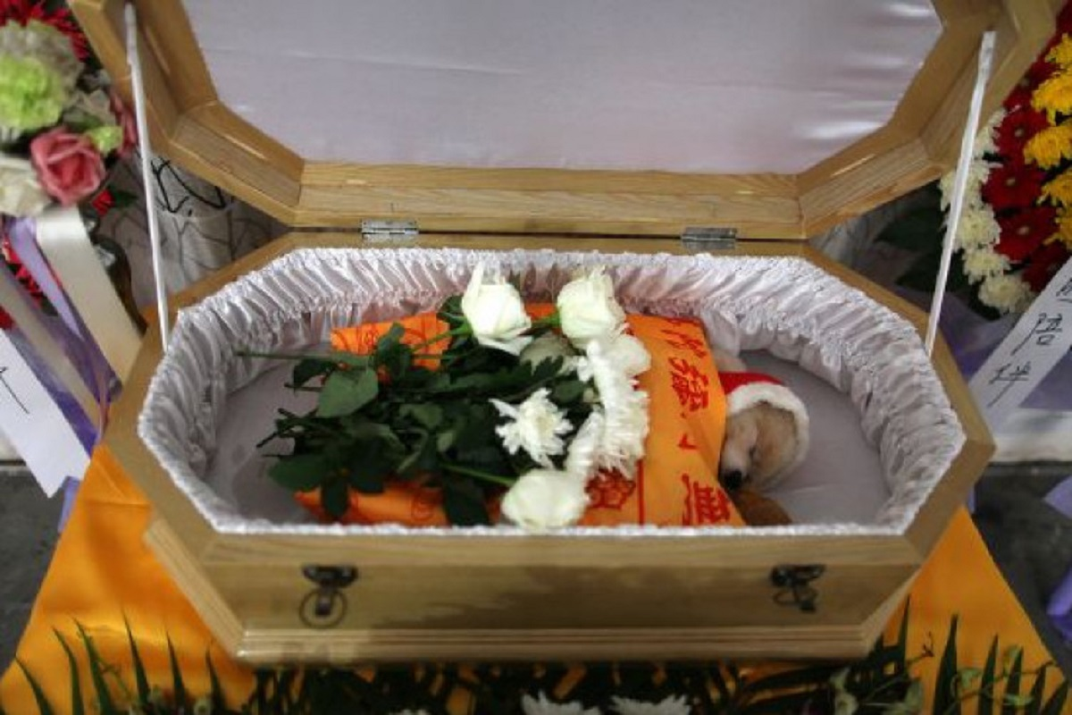 Funeral of a pet? - 2 days Holidays with pay!