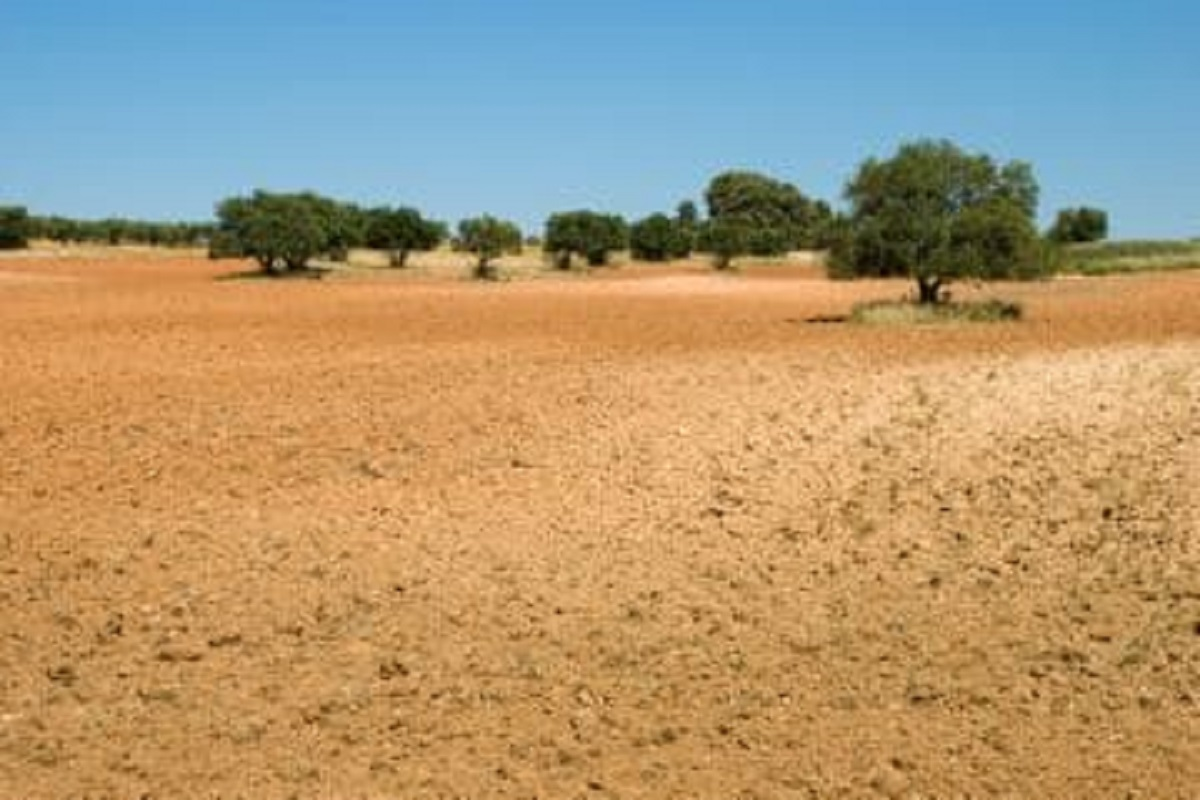 Subsidy for Barren Land Development Project - Rs. 13,000 per hectare!