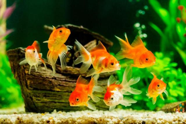 Colour Fish