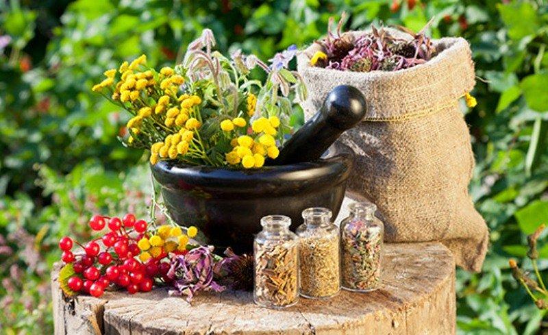 Herbs for Skin
